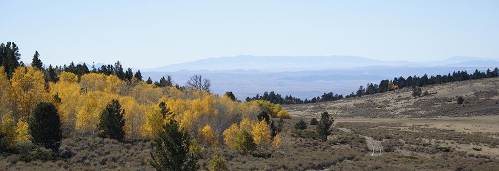 Fall in Wyoming